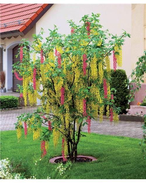 Www Willemsefrance Fr www.willemsefrance.fr mobile arbres-et-arbustes-c102x3381874