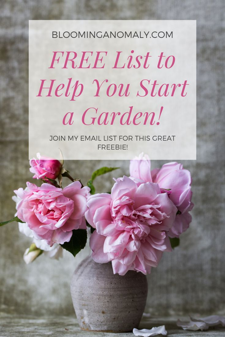 Would you like to learn how to start a garden? It is easy