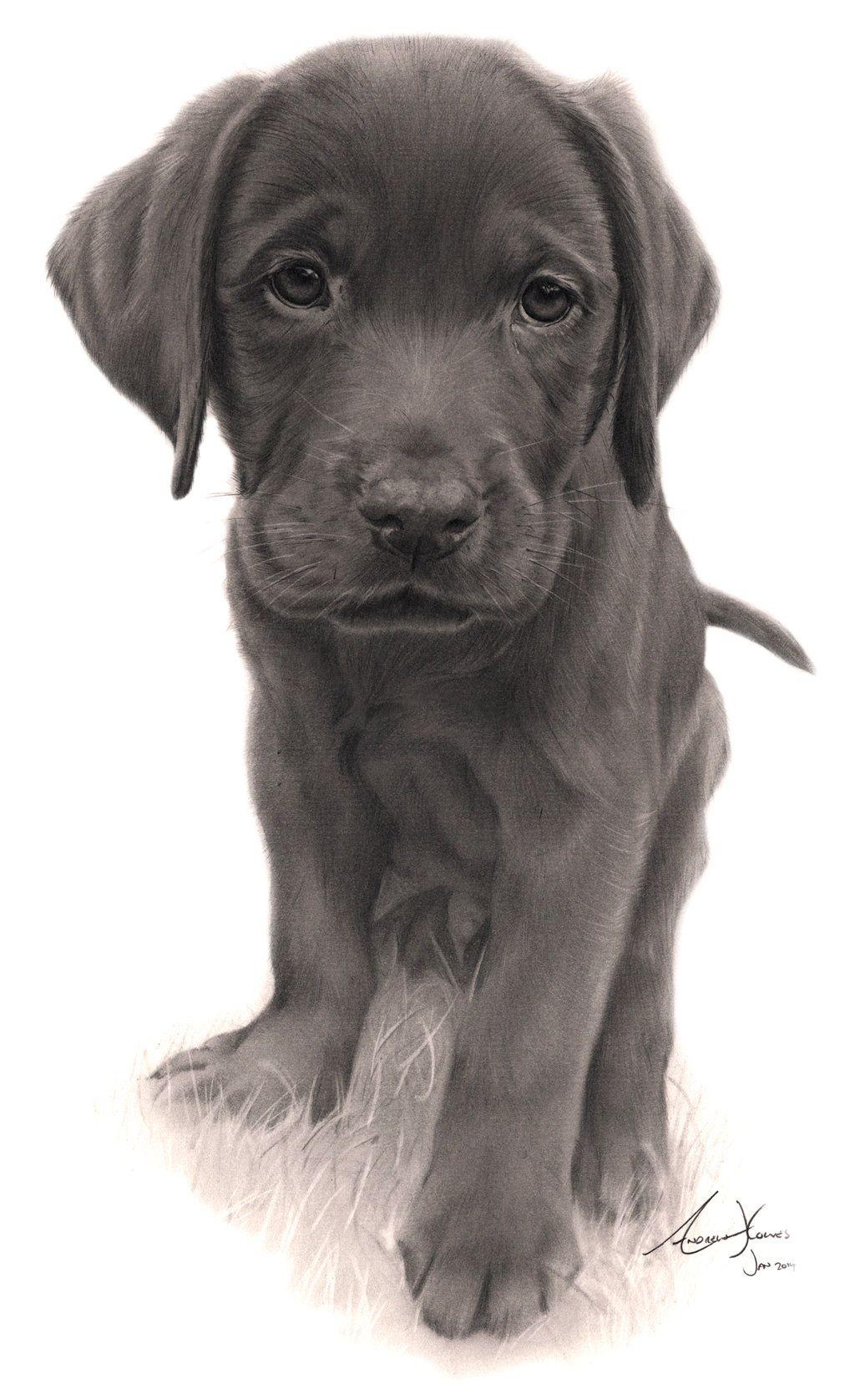 Commission  Labrador Puppy By Ajhartiantart On @deviantart