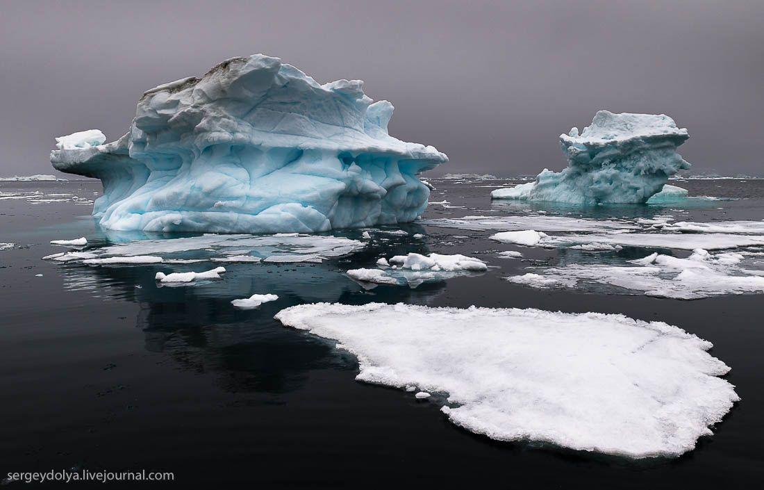 Плавание с гренландскими китами в Арктике « FotoRelax