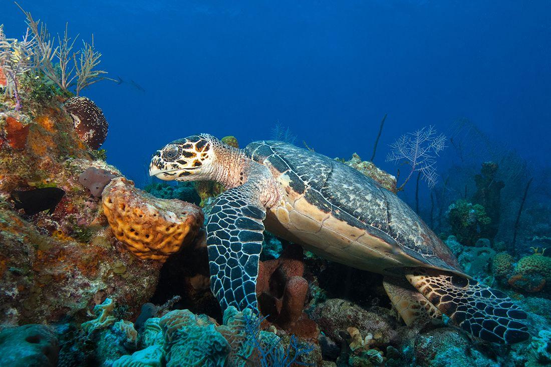 Turks Caicos Diving Best Scuba Diving Scuba Diving
