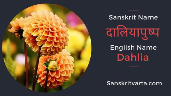 List Of Flowers Name In Sanskrit Hindi And English With Pictures In 2020 Sanskrit Sanskrit Language Sanskrit Names