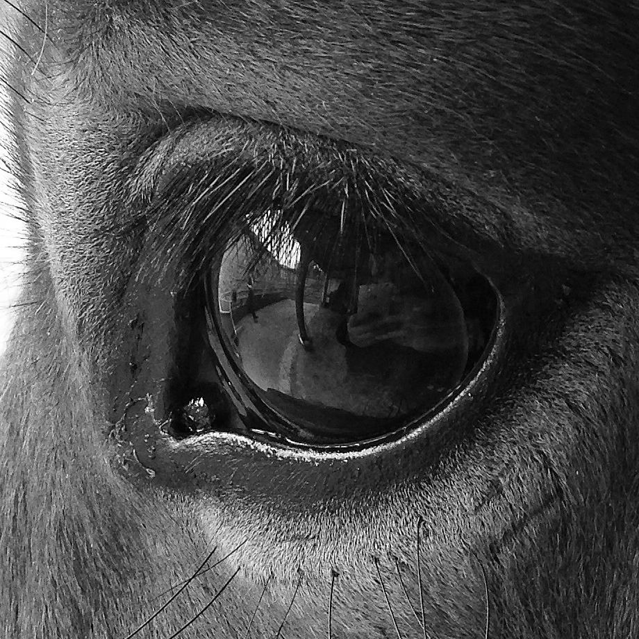 the majestic eye just love the horses eyes. | misc | Pinterest ...