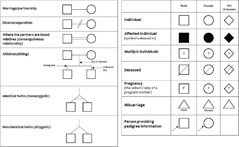 What Symbols Do I Use To Draw The Pedigree Family Tree Chart Genealogy History Genogram Template