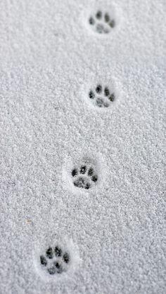 Path of  le cat//