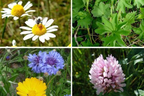 Jak vybírat léčivé byliny v létě
