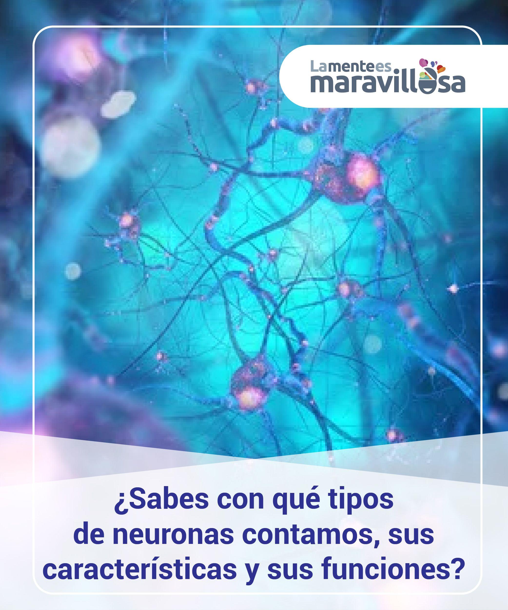Sabes Con Qué Tipos De Neuronas Contamos Sus