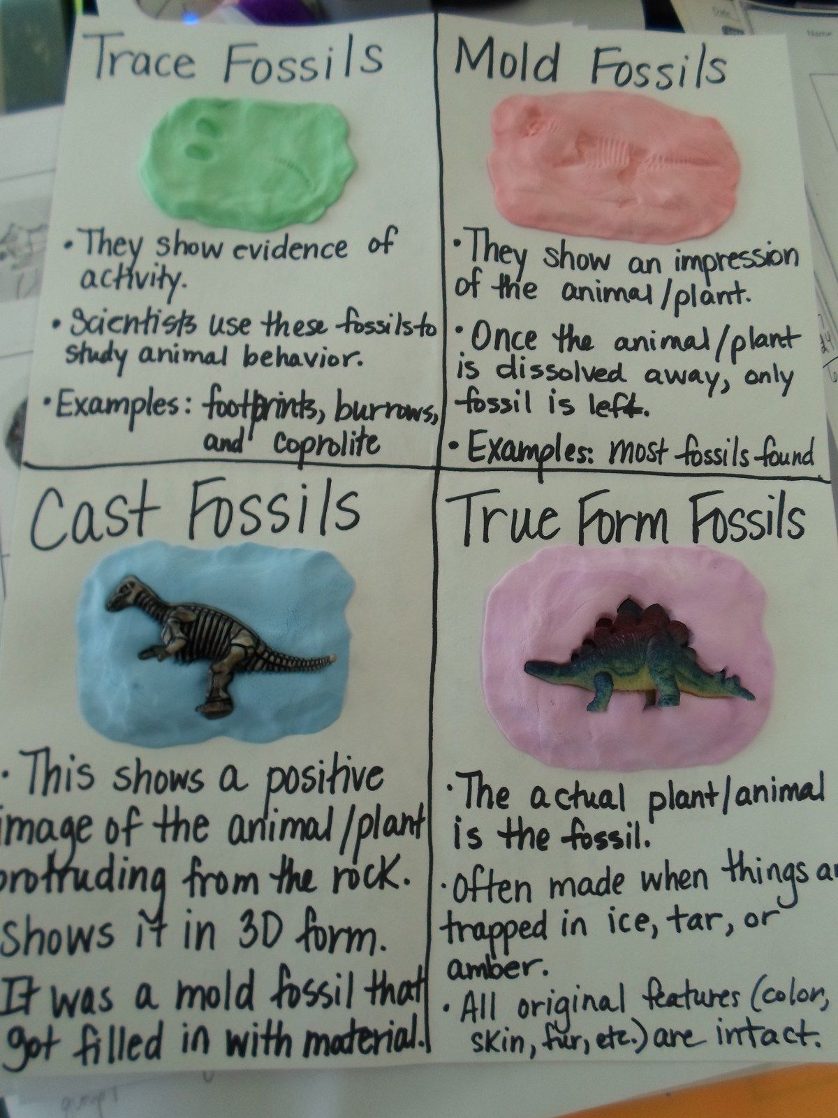 Four Types of Fossils – Types of Fossils Worksheet