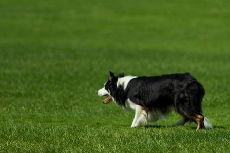 Pin By Terry Diack On Dog Tips Herding Dogs Dog Friends Dogs