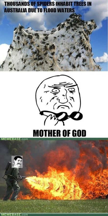 I Hate Spiders Signs Pinterest Rage Comics Funny And Lol