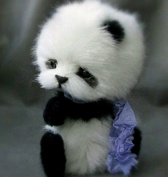 Aww cute baby panda #adorable #animal #wild #babypandas