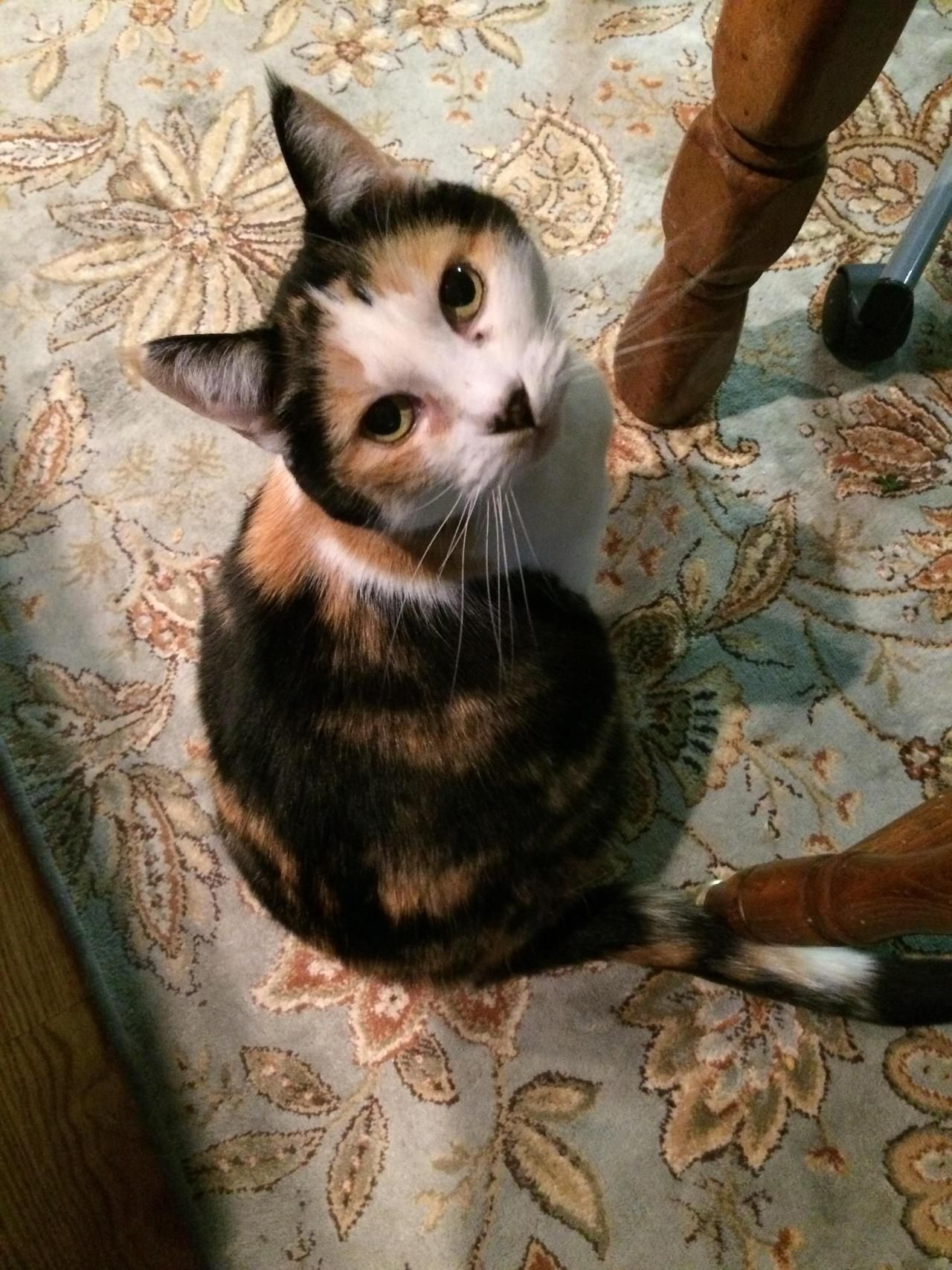 Its Been 17 Amazing Years Farewell My Dear Cali By Infimae What You Think About Beautiful Cats Cute Cats And Kittens Animals Beautiful
