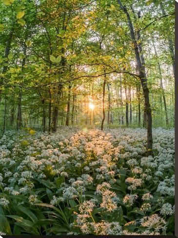 Stretched Canvas Print: Floral Forest Scene by Grab My Art : 40x30in