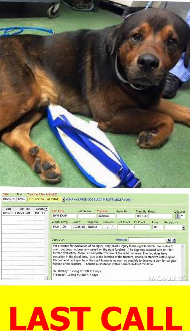 Pin By Aggi Church On Pets Rottweiler Mix Save A Dog Dog Fighting