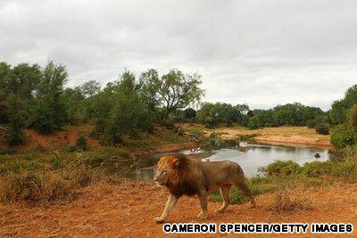 Africas Best Safari Parks Kruger National Park Safari And - 10 best safaris in africa