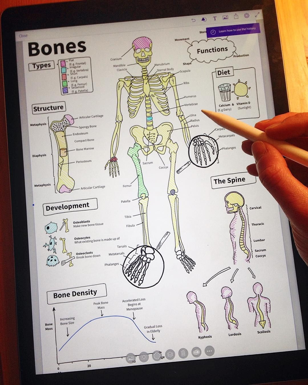 Adding the final labels to my piece on the basic anatomy of the ...