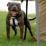 Secrets To Dog Training: Stop Your Dog Behavior Problems! @ Amazing Pitbulls http://searchlocated.com/pitbulls