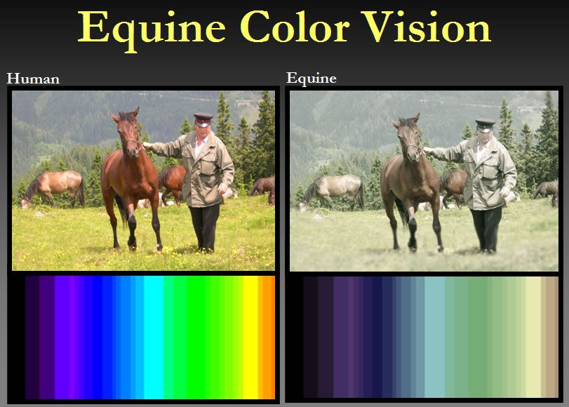 Equine Vision Equines Horse Care Veterinary Services