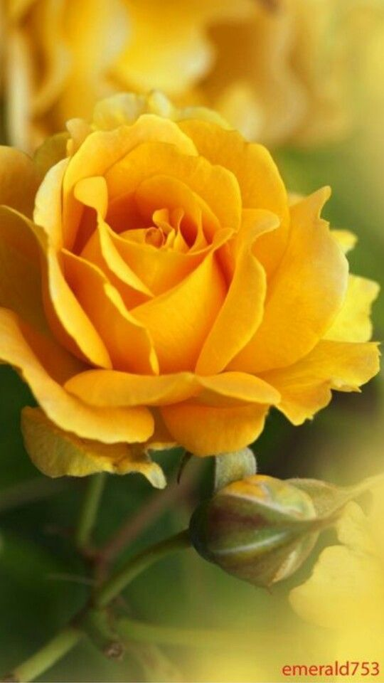 Add Some Yellow Into Your Day Beautiful Flowers Pinterest