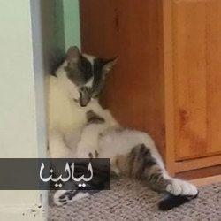 صور قطط مضحكة تنام في أماكن غير متوقعة على الإطلاق Cats Animals Photo