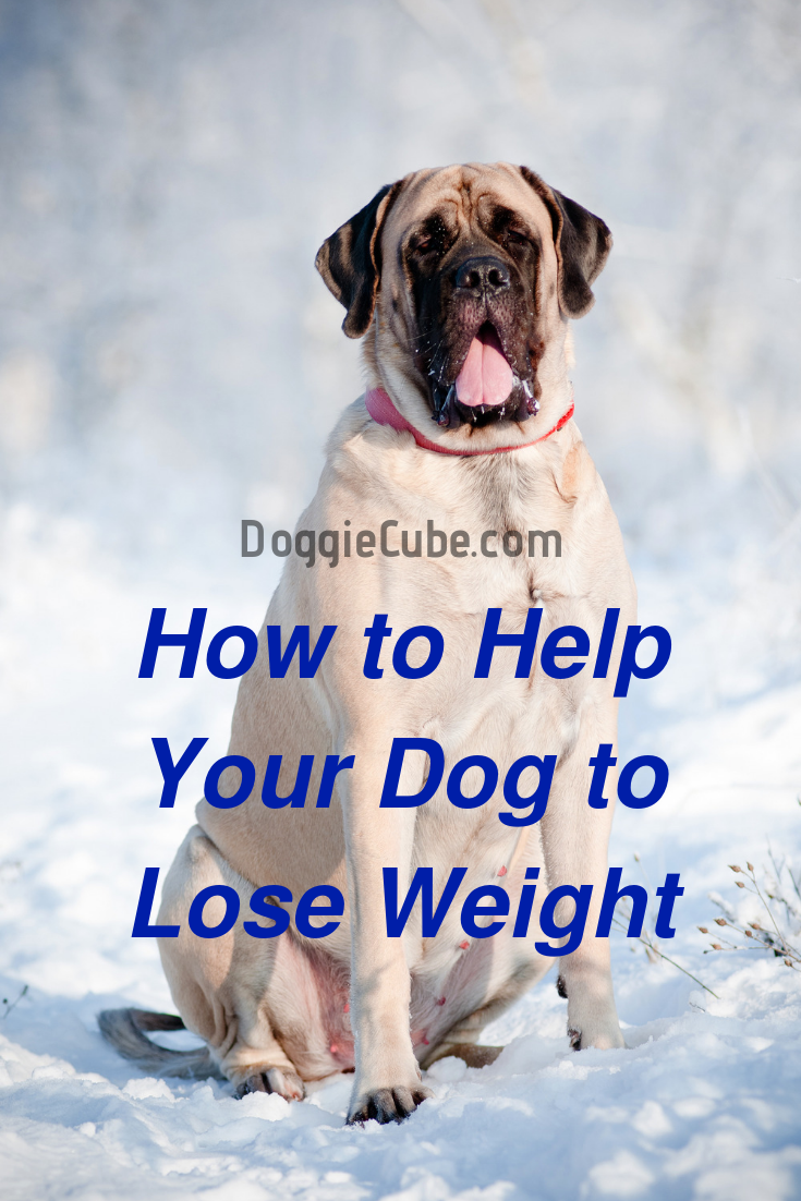8c25743f96655aba9990ff6fdc2f7639 - How To Get My Overweight Dog To Lose Weight