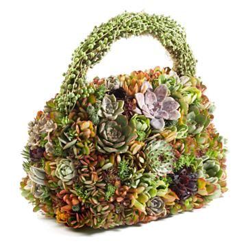 Fun succulent purse
