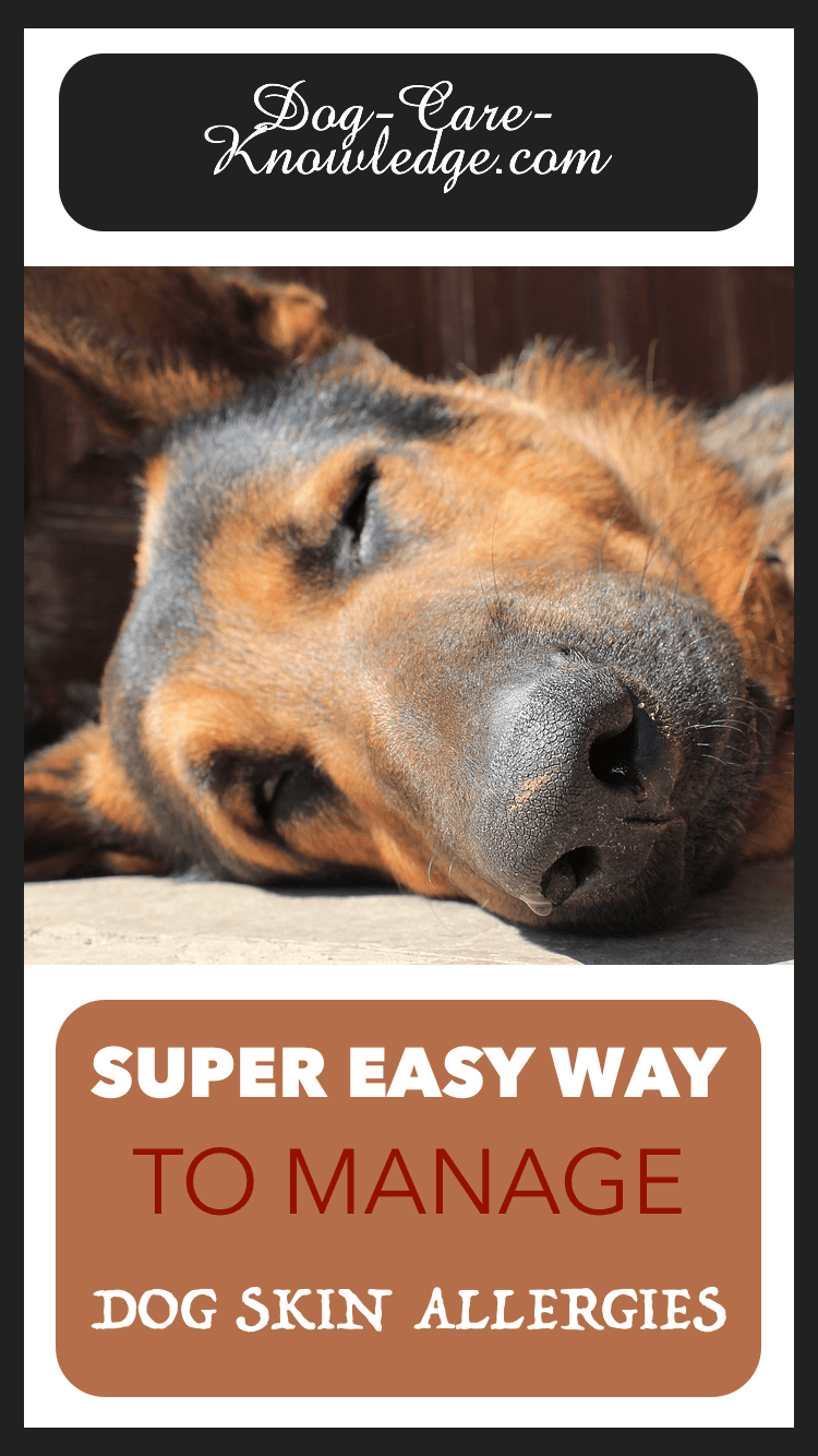 Dog Skin Allergies This Is A Super Easy Way To Manage Them Dog Skin Allergies Dog Allergy Symptoms Dog Allergies