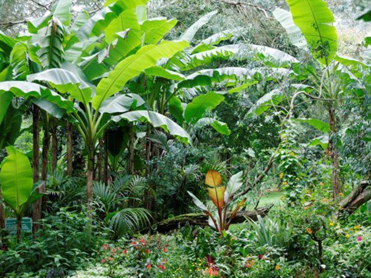 Comment Creer Un Jardin Tropical Jardin Tropical Creer Son Jardin Jardin Exotique