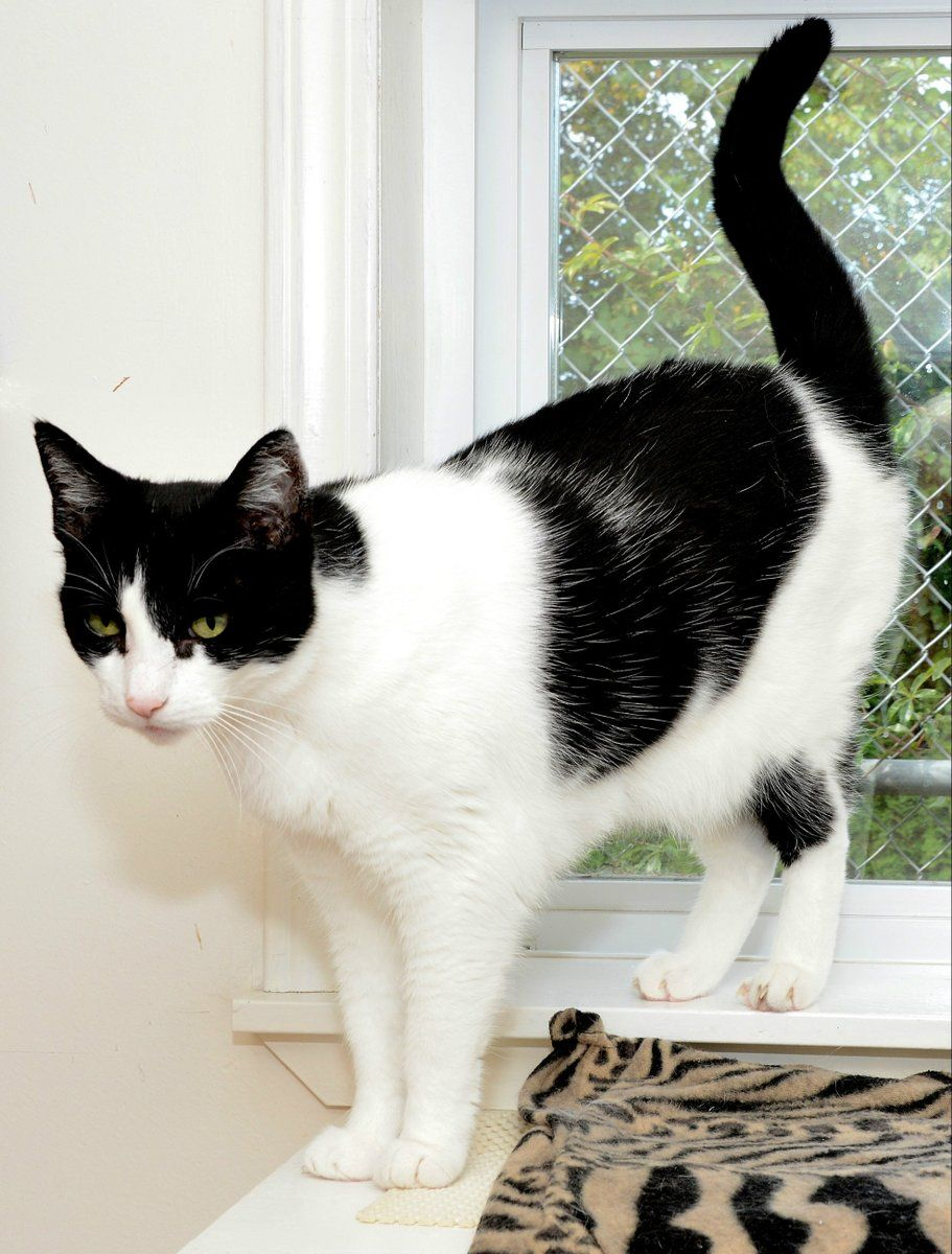 Shelby Dog cat, Kitty, Cats