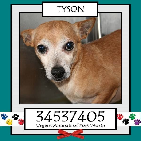 TO BE DESTROYED 04/24/17 ***REASON: MEDICAL*** TYSON