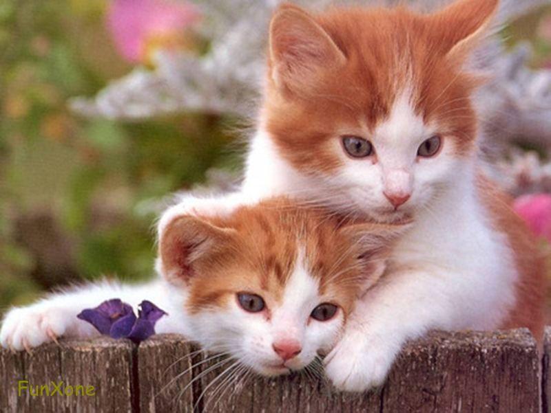 Ohh! son tan adorables estos gatitos!
