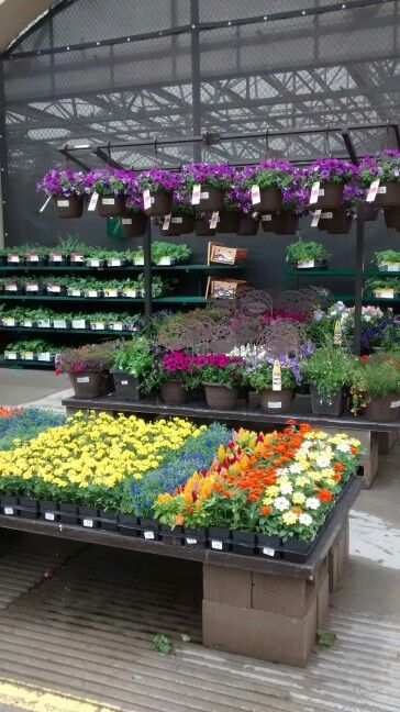 Annuals And Bonnie Plants With Images Garden Center Displays