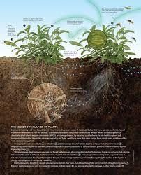 Resultado de imagem para bioavailability plants