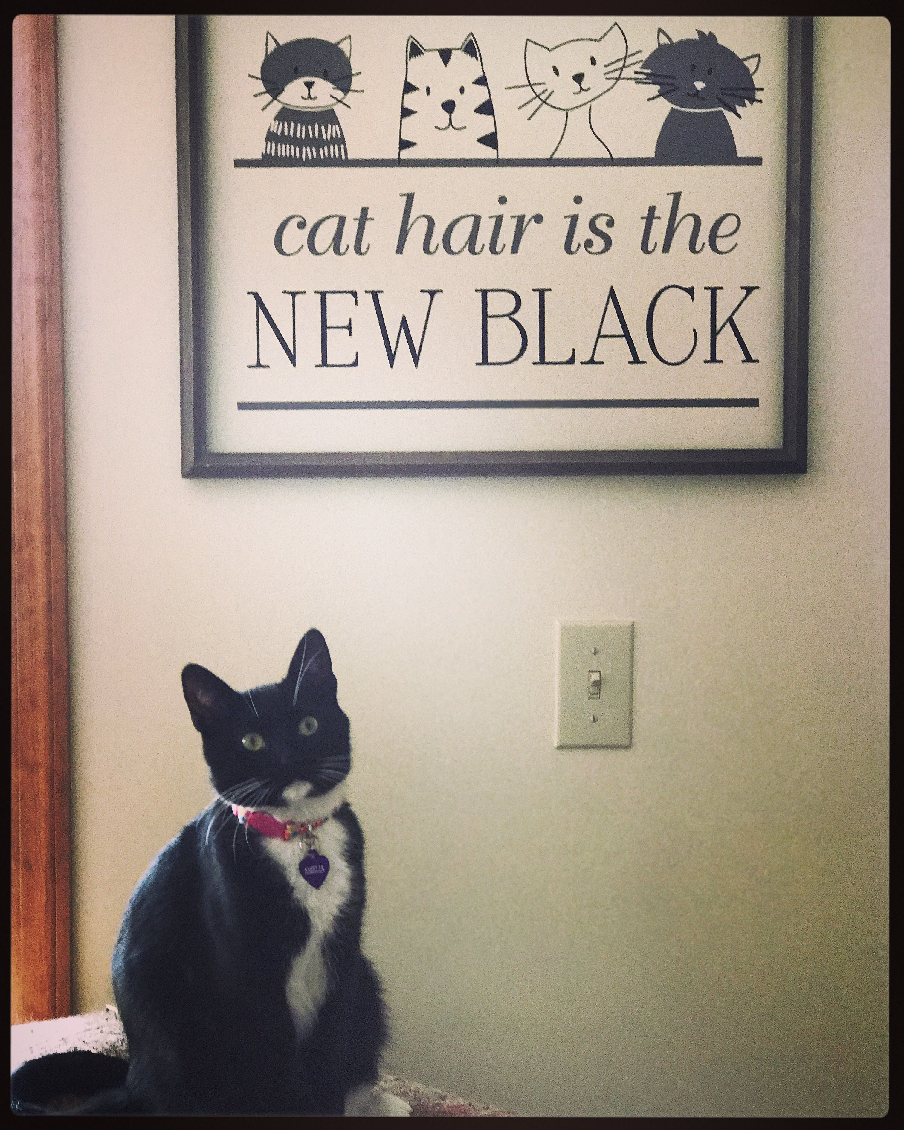 Cat hair is the new black!! uppercaseliving Cat hair