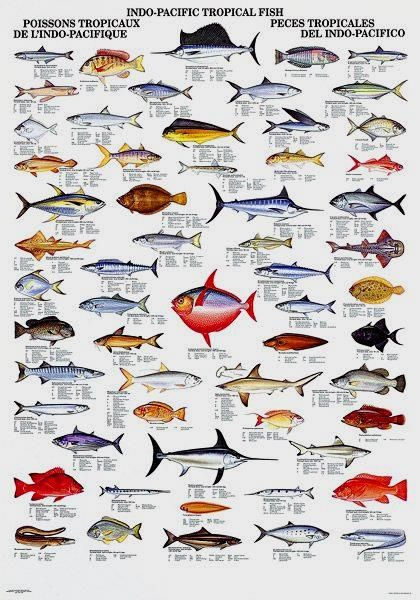 Fish Outdoor Amanda And Chart On By Pacific Saltwater Nicole Fishing Pin Fish Useful Sport -