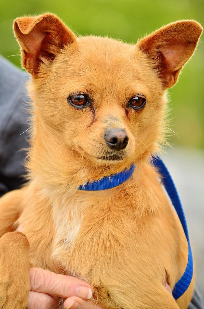Adopt Carlos ADOPTED!! on Small dog adoption, Animal