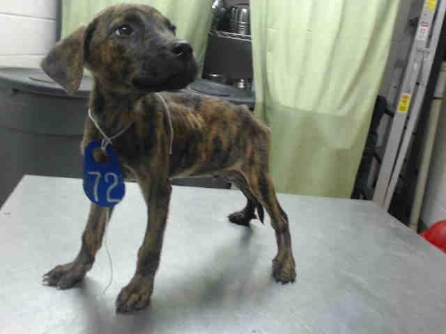 08/17/15HOUSTON This DOG ID A440741 I am a male