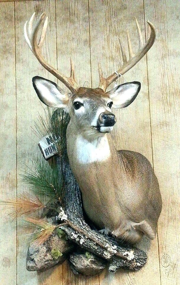 Animal Heads Head Wall Decor Decorating In 2020 Deer Hunting