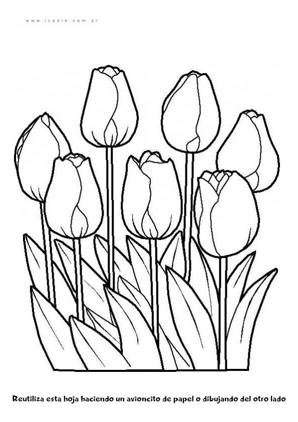Educacion Infantil Blumen Ausmalen Malvorlagen Blumen Blumen Ausmalbilder