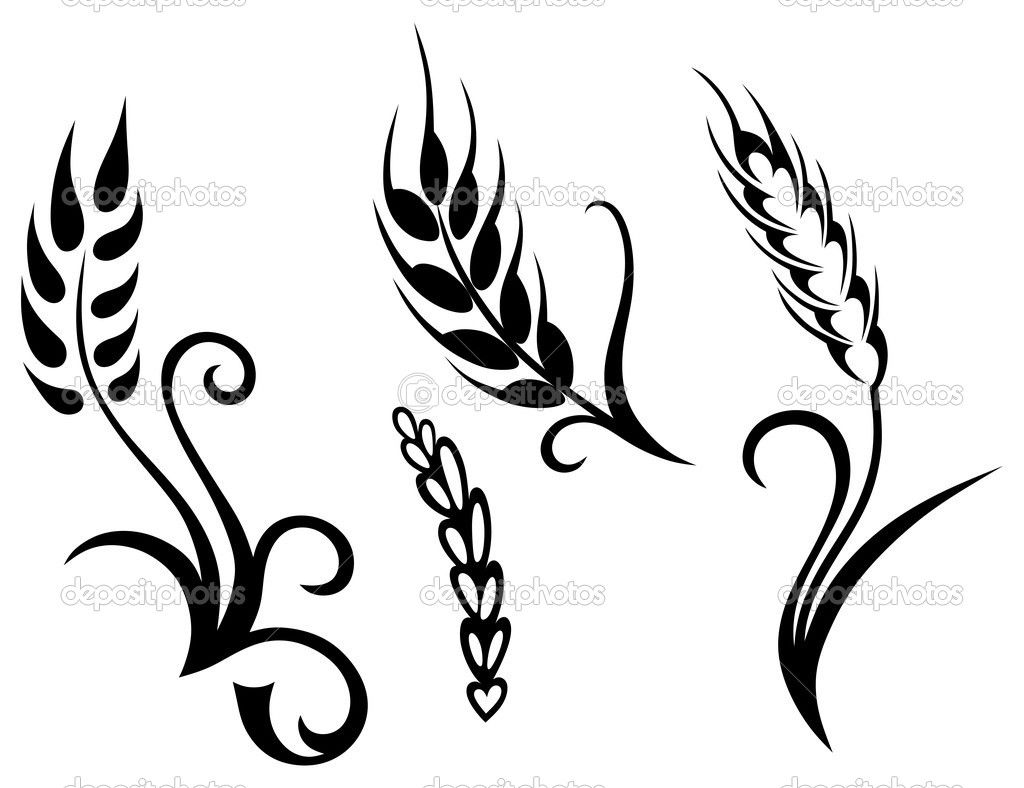 Line Drawing Grass : Non copyrighted drawings wheat and rye u stock vector kreativ