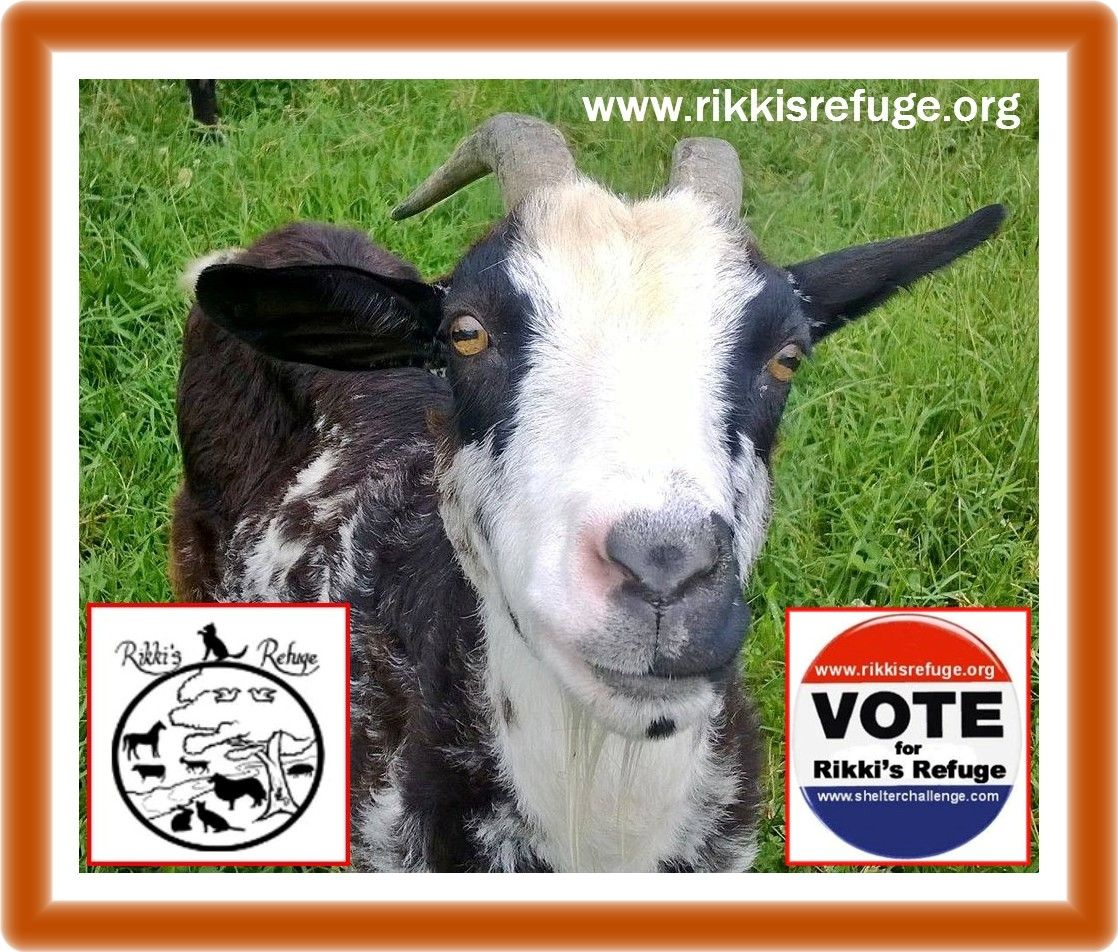 Please VOTE & SHARE for RIKKI'S REFUGE in the Animal Rescue Site SHELTER CHALLENGE every day! Thank you! Vote here: http://www.shelterchallenge.com/web/charityusa/nomineehome?userId=53331&nomineeId=17448