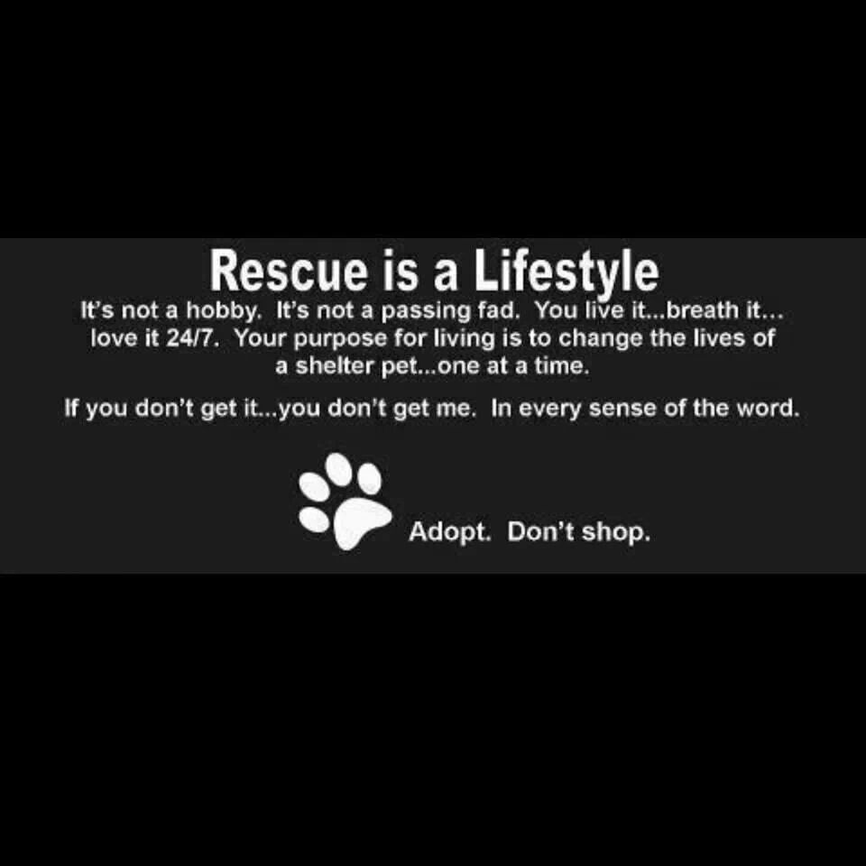 Rescue Always Rescue Animal Rescue Quotes Animal Rescue Rescue