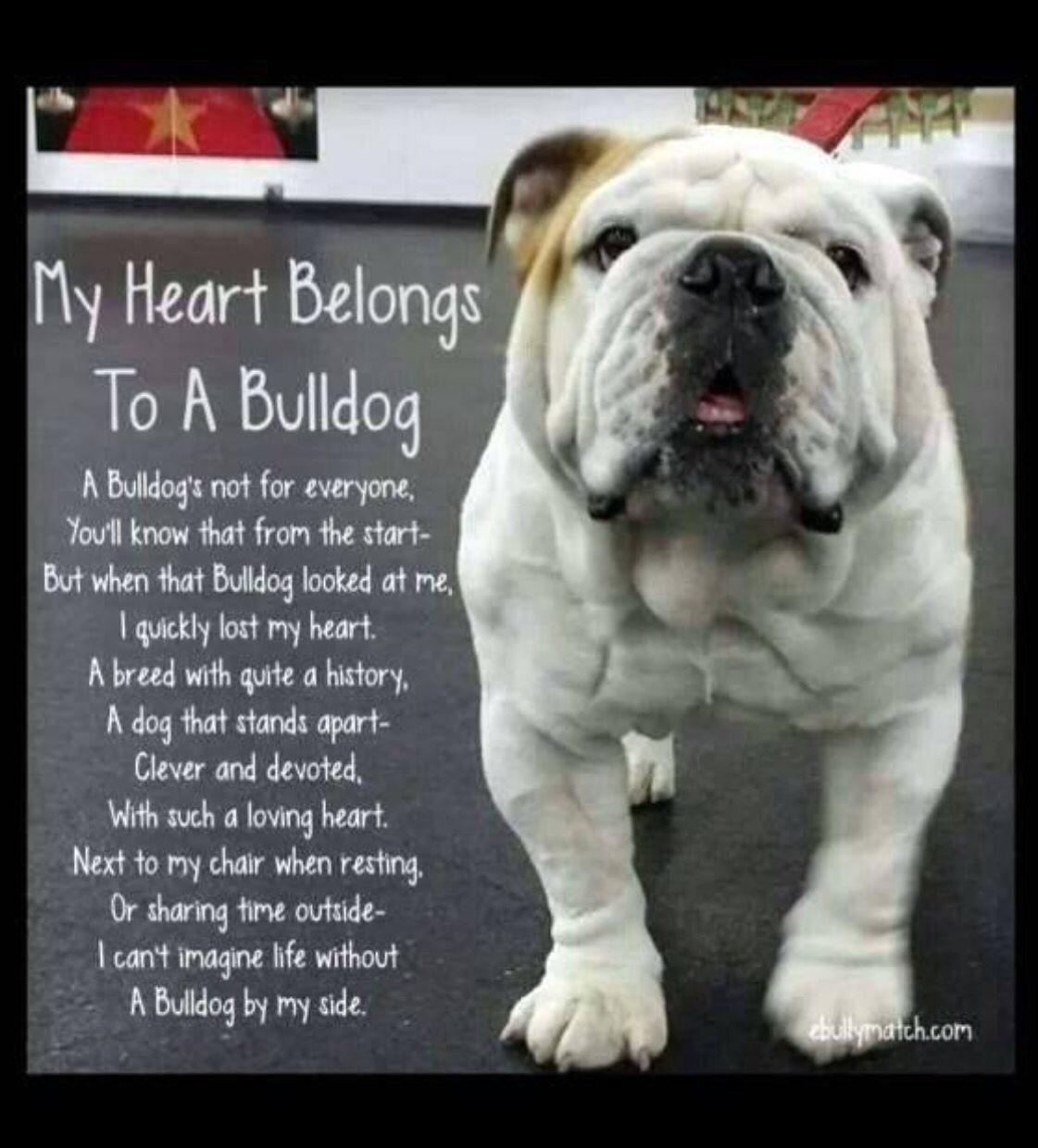 English Bulldog Love Bulldog English Bulldog Bulldog Puppies