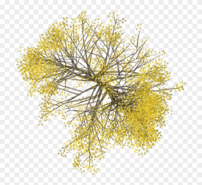 Plan Tree Png Google Search Trees Top View Tree Photoshop Tree Plan Png
