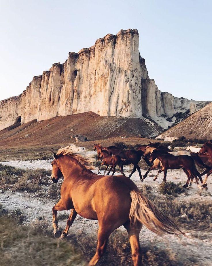 картинки дикого запада диких лошадей поймать эту