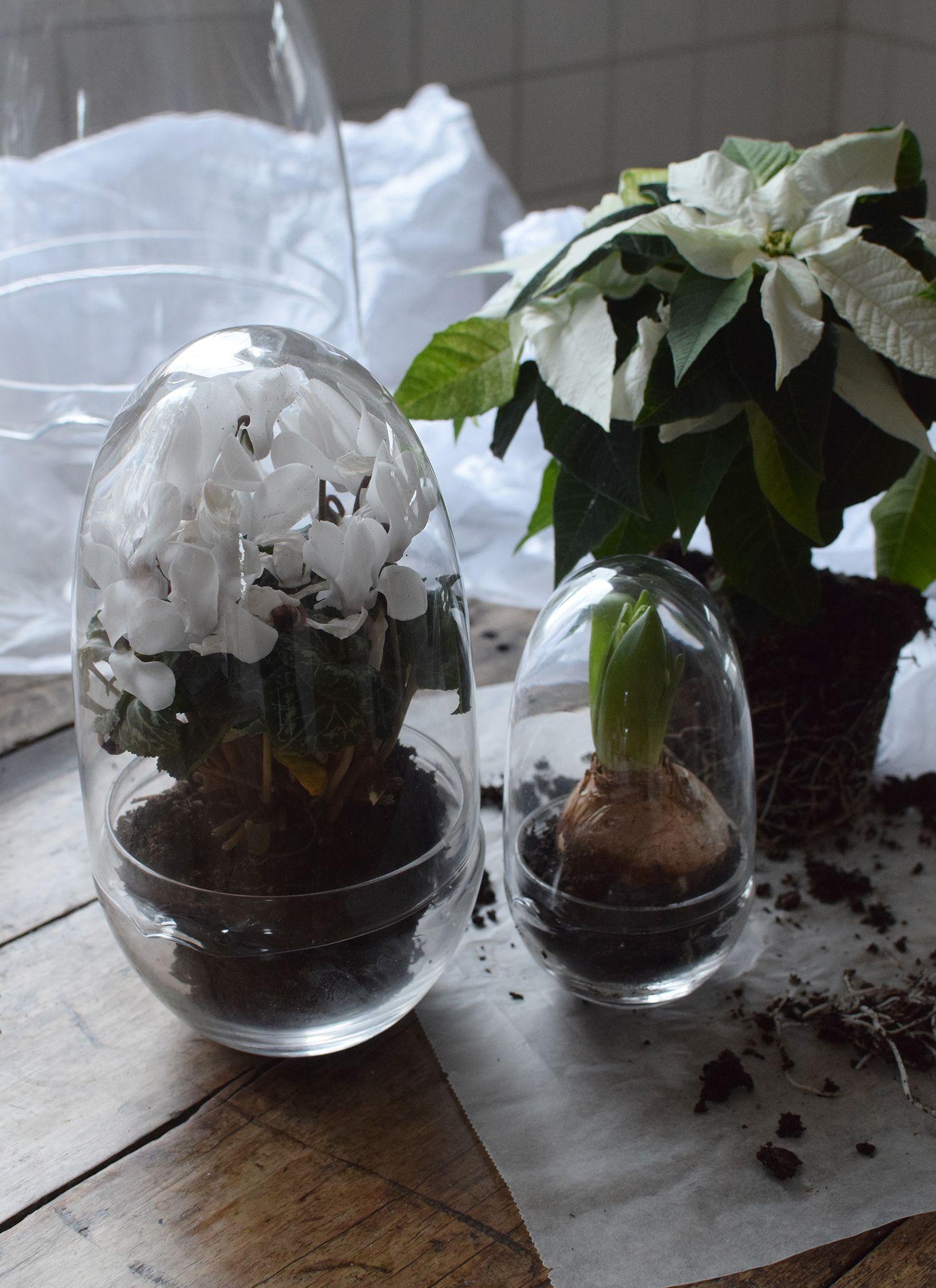 Vaxthus Grow Glas L Vaxter Jul Glas