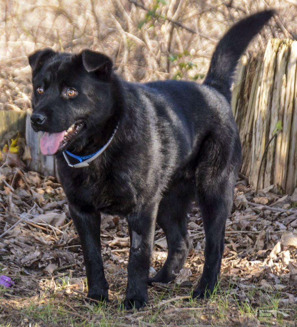 Adopt Me! I am at Yakima Humane Society. Humane society