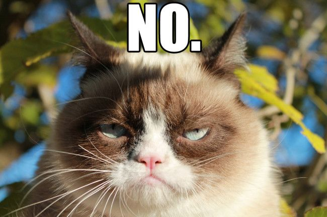 Saying Yes When You Really Want to Say No | Funny cat videos, Cat memes,  Grumpy cat
