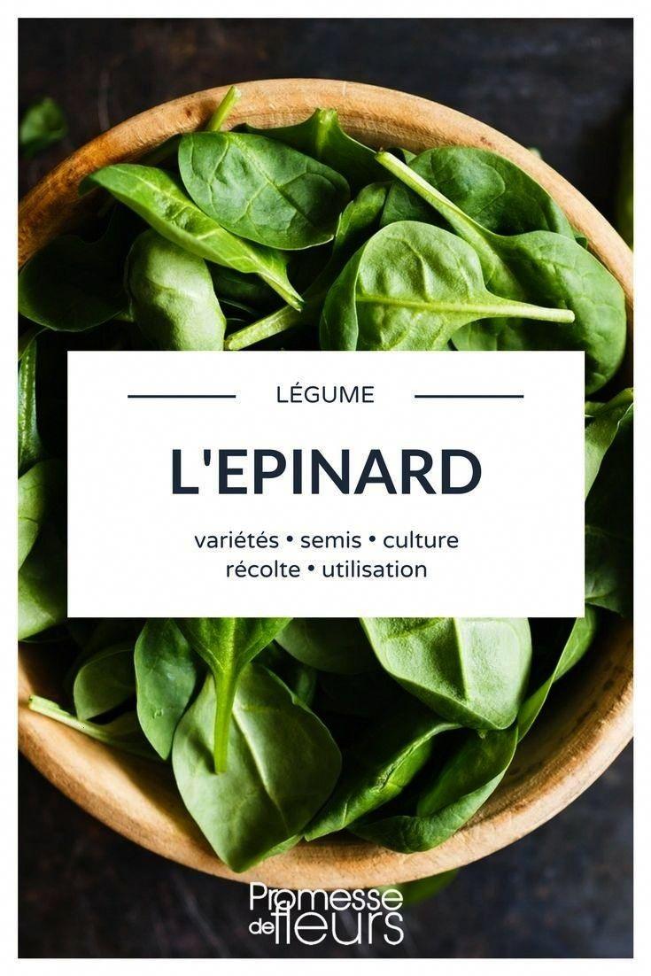 Comment Planter De L Échalote explication #découvrez #lépinard #récolter #jardinage