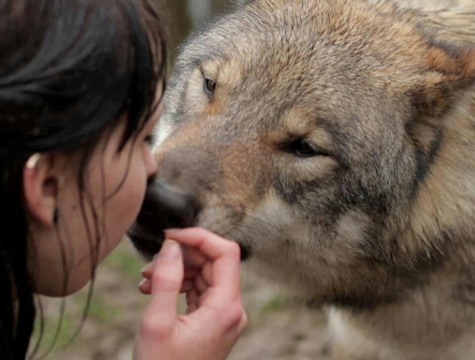 esa research the red wolf Manteo – the fate of endangered red wolves could be settled by year's end,   and the agency is continuing to work with researchers on the issue  as it is now , benjamin said, it is listed as endangered under the esa, and.